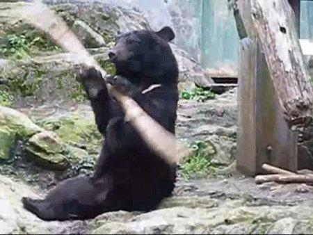 ours ninja bear kung fu baton zoo